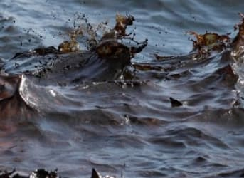 BP May Owe Anglers $585 Million After Oil Spill