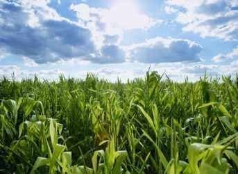 U.S. Corn-Ethanol Gas Push: Small Step in a Grand Project