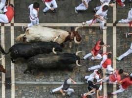 Oil Bulls