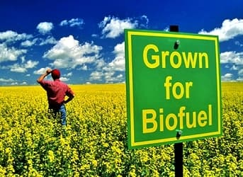 13 Strange and Interesting Sources of Biofuel