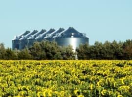 Is U.S. Biofuel In Jeopardy?