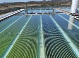 Algae May Be Green Energy's Secret Weapon