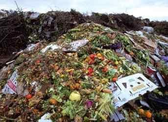 $750 Billion in Food Wasted Every Year