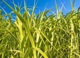 Why Biodiesel May Not Be The Miracle Fuel You Think