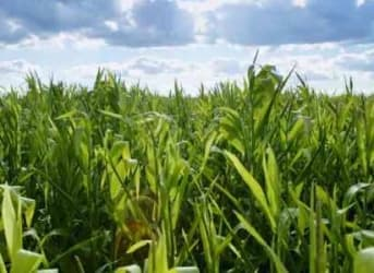 Biofuel Industry Presses White House To Strengthen Renewable Fuel Program