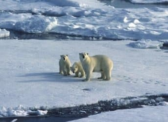 Shell's Arctic Drilling Campaign Starts to Falter