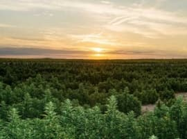 How Technology Is About to Transform the $150B Cannabis Market