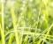 Cheaper, Cleaner Biofuel May Be Right Around The Corner