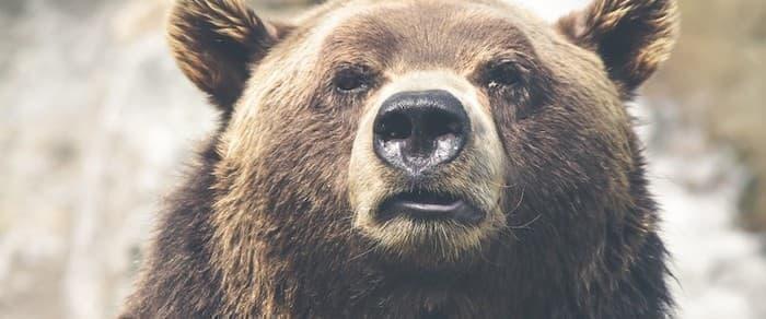 Oil Bears