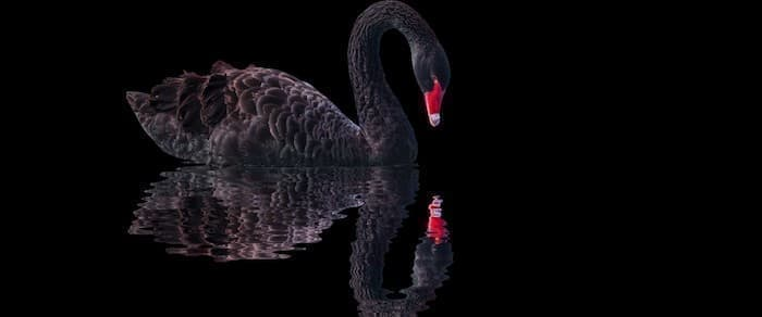 OPEC Black Swan