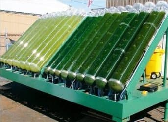 Algae's Momentum Gaining but it's no Oil Revolution