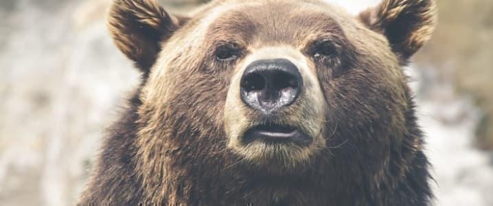Bearish Bias