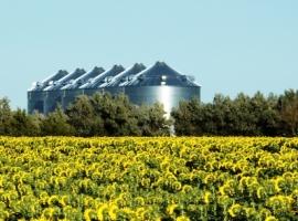 Big Corn vs. Big Oil: The Battle Over Biofuel